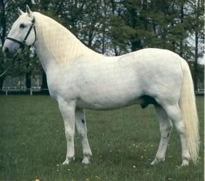 http://www.blackhorse.estranky.cz/archiv/iobrazek/4658